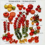 TOMATE - LYCOPERSICON ESCULENTUM - QUESTION 1152